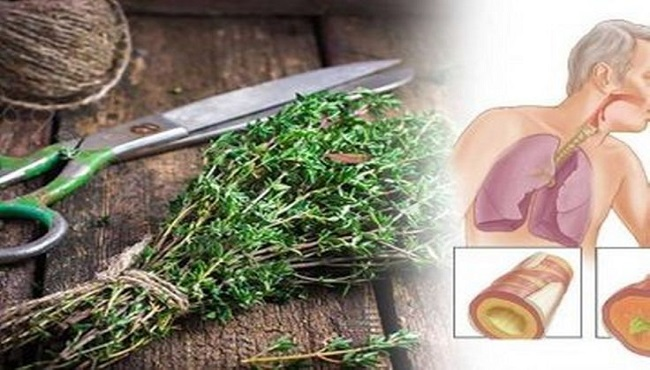 "15 ""Super Herbs"" to Kill Infections and Clear Mucus From Your Lungs in No Time"